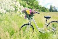 nancy_bicycle-788733_1920.jpg